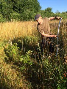 Das Gras droht die Bäume zu überwachsen und muss regelmäßig gemäht werden